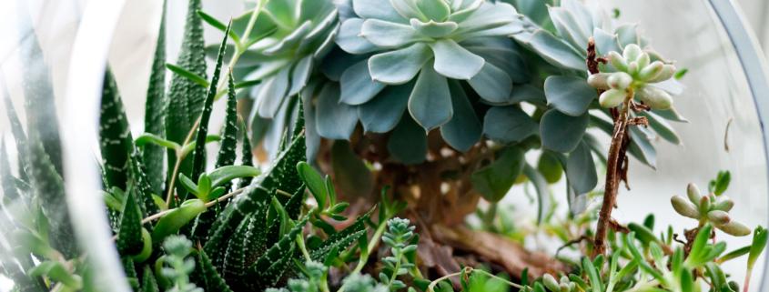 Planten goed voor gezondheid