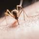 Muggenbulten